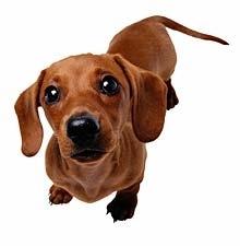 chien-clinique-veterinaire-contact