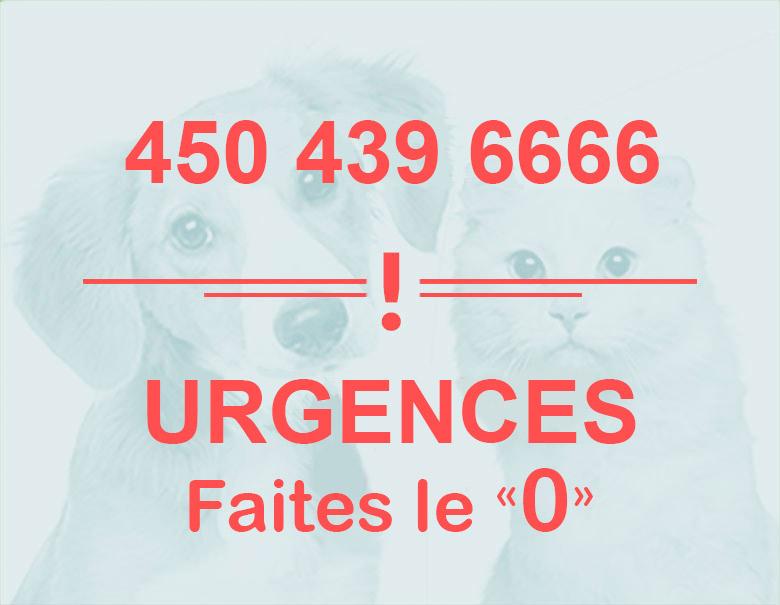 home_veterinaire2